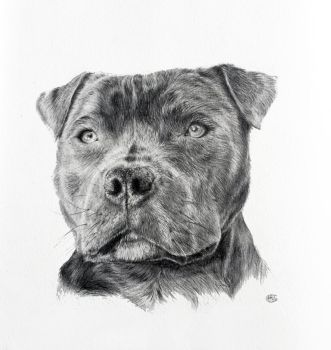 Staffy by CatAclysmArt