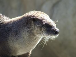 Otter again by dtf-stock