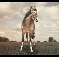 .:BMS Sea For Yourself:. by BlueMoonStables