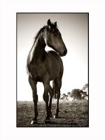A Potrait of A Horse by layoxxx