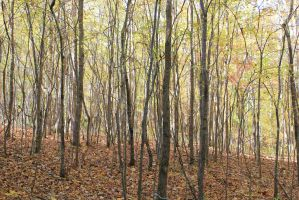 Little Forest Somewhere - November 2013 by Crystal-Marine