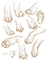 Paw Study by Cryptic-Alchemist