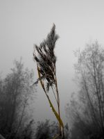 Darkness in Nature Project 42 by RkChimaira