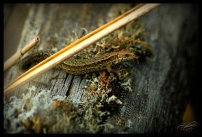 Reptiles are awesome by Murklins