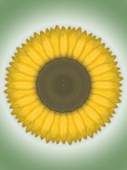 Summer Sunflower by TMBrant