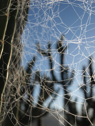 Messy Web by photographyflower