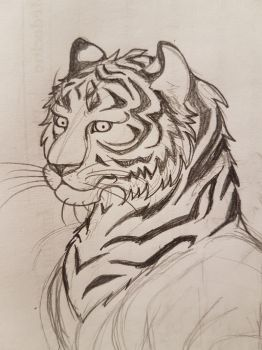 Tiger doodle by TurtleClairou