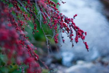 River Berries by melonemond