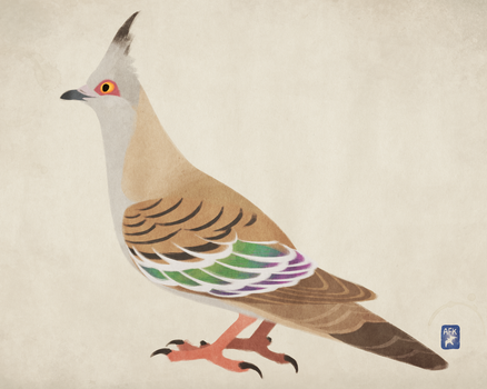 Crested Pigeon by Hogia