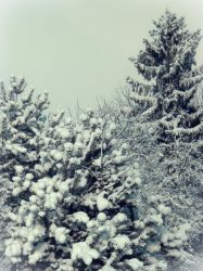 Winter by Sonia385