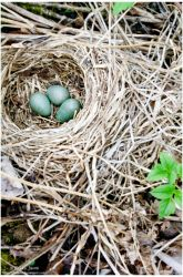 3 in the nest by Tatalia