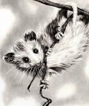 Dangling Baby 'Possum by TubaQueen