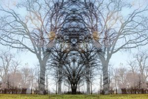 overlapped growth by depthdweller