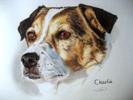 Charlie the Jack Russell by RTyson