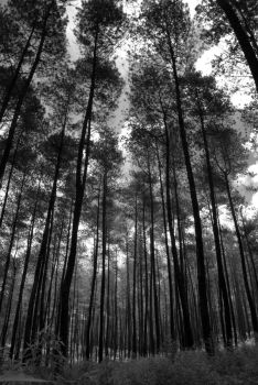 black forest by nsghtphotography