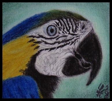 Macaw Portrait by Sylpheah