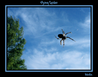 Flying Spider by benelie