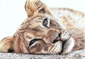Tired Young Lion by ArtsandDogs