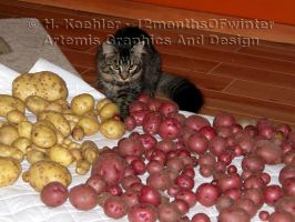 Inspecting The Toy Harvest by 12monthsOFwinter