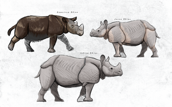 Sketch: Rhinos of Asia and Indonesia by vcubestudios