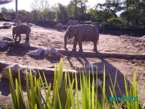 Chester Zoo by panthera-panther