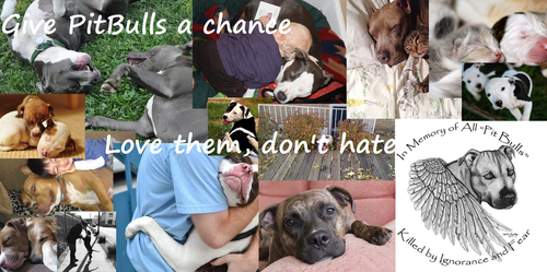 Give PitBulls a chance by BlizzardHaze