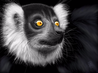Black Lemur by digitalchet