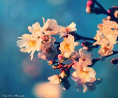 Bloom III by MyLifeThroughTheLens