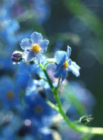 forget-me-nots5... by TheRedGirl