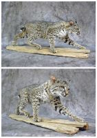 Cat on the Prowl by WeirdCityTaxidermy