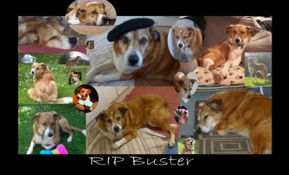 RIP Buster, 2004-2018 by dashinvaine