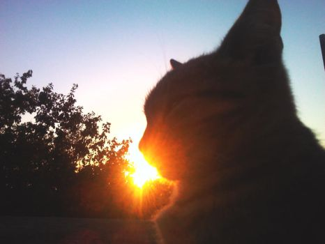 Cat in the sunset - Eat it :3 by Cazerius