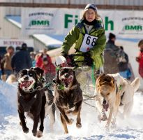 dog sled by moonshadow76