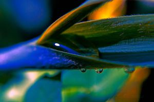 Drop On Leaf Reed 2 by hubert61