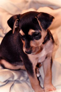 Pepito - My new lovely Puppy by Crazito
