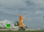 Cat lift off GIF by Ghostexorcist
