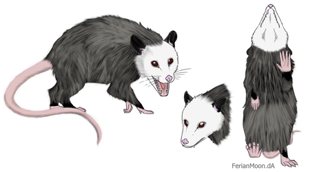 Opossum (colored lineart) by gamerd