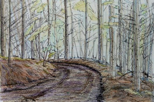 Forest Track Study #2 by CCCanyon