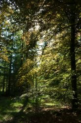 forest with back-light by deianira-fraser