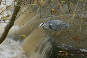 The Grey Fisher II by Sinande