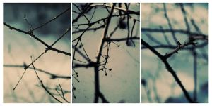 Branches by big-white-house