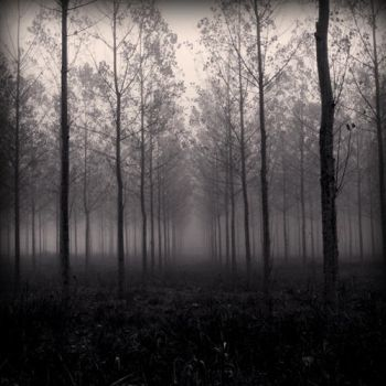 Brume - Forest by Aiae