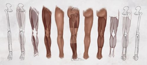 AS Drawing the Legs by CGCookie