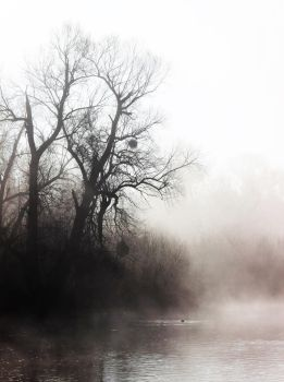 Into The Mist by Caillean-Photography