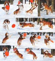 Ray's frisbee day by Vikarus