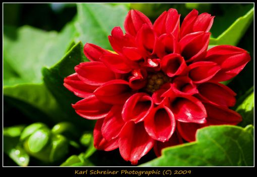 Red 4 by KSPhotographic