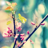 Blossoms II by Lady-Tori