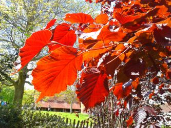 Autumn Leaves by OMGEDDSWORLDOVERLOAD