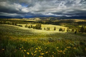 The vast lands of Yellowstone by matthieu-parmentier