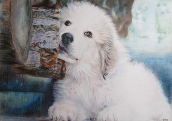 pyrenees dog 3 by Booze528